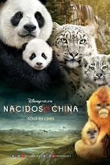 NACIDOS EN CHINA - BORN IN CHINA