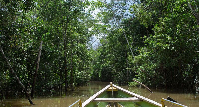 Reserva Natural en el Amazonas - Shutterstock
