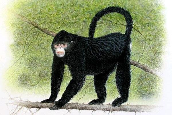 Nueva especie de mono en Myanmar