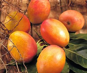 El mango y sus propiedades nutricionales y curativas