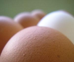 Los beneficios y mitos del huevo en la dieta
