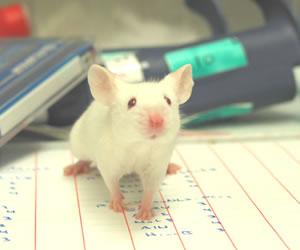 Desarrollan una vacuna que ataca el cáncer en ratones