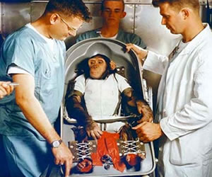 EE.UU limita el uso de chimpancés en investigaciones