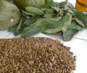 Productos naturales colombianos al sevicio de la medicina