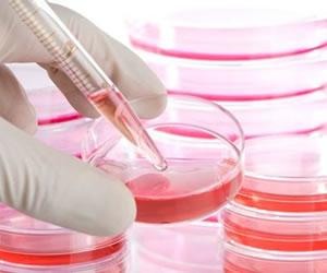 Logran recrear el sistema inmune para la investigación de enfermedades