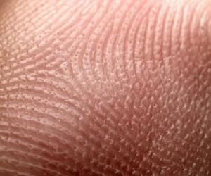 Crean musculo cardiaco a partir de células de la piel