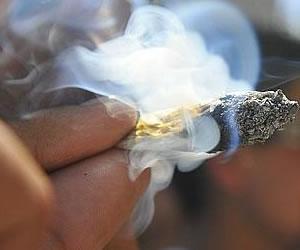 El consumo de marihuana duplica riesgos de cáncer de testículo