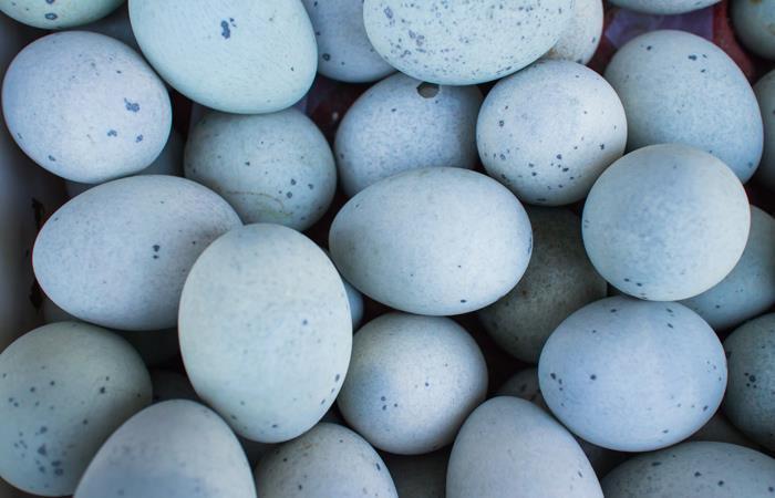 Huevos cocinados para halloween