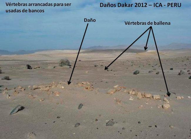 Denuncian que el Dakar dejó basura y fósiles destruidos