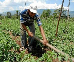 El destino depende de solucionar problema de tierra: FARC