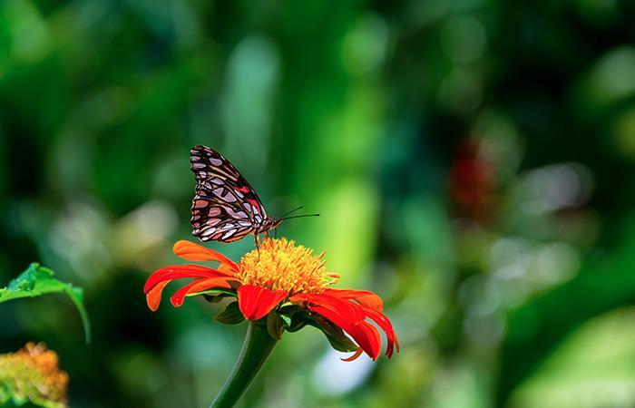 El Ecoparque Los Yarumos es uno de los atractivos más visitados por los turistas. Foto: Shutterstock