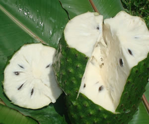 Las propiedades nutritivas y medicinales de la guanábana