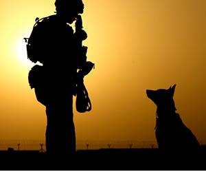 Animal Planet nos invita a conocer otra cara del mejor amigo del hombre en Compañeros de Guerra