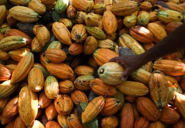 Primer concurso nacional de cacaos