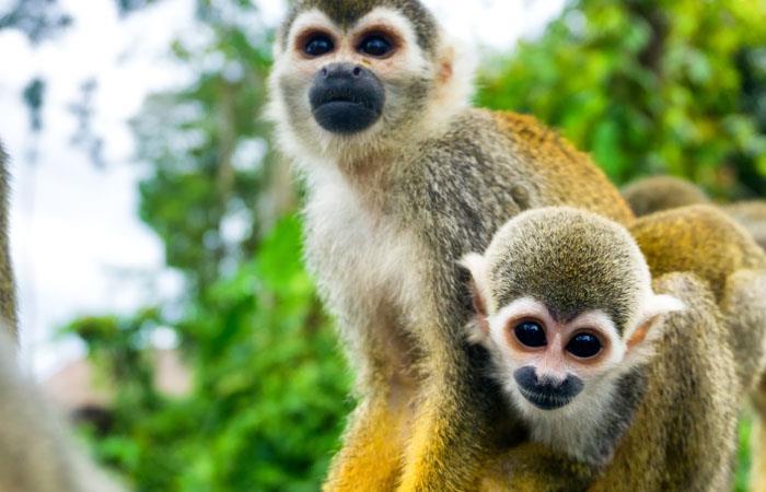 La Isla de los micos un espacio natural en la selva Colombiana. Foto: Shutterstock