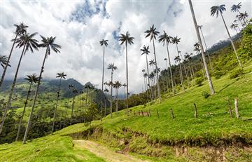 Salento y El Valle del Cocora