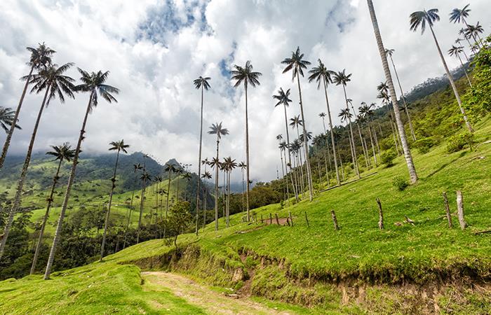 Salento es el pueblo que vigila el Valle del Cocora. Foto: Shutterstock