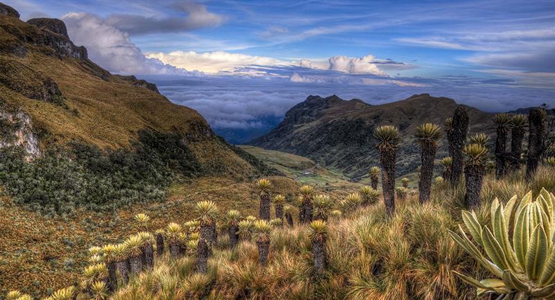 Parque Nacional Natural Los Nevados, auténtica emoción natural