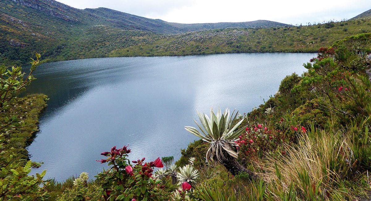 La vida en el Parque Nacional Natural Chingaza es todo un espectáculo. Foto: Shutterstock
