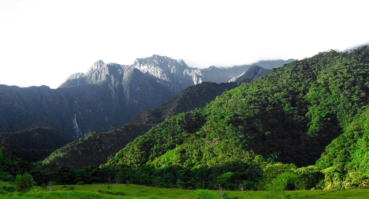 Parque Nacional Natural Tatamá. Foto: Mario A. Santana - Flickr