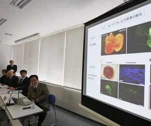 Científicos nipones se disculpan por anomalías en su estudio de células madre