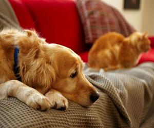 Recomendaciones para manejar alergias a las mascotas