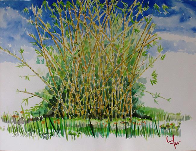 Bambu acuarela