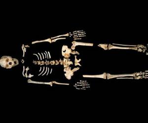 La genética cambiaría la interpretación de la evolución humana