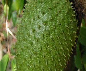 Las 10 razones por las que debemos comer guanabana