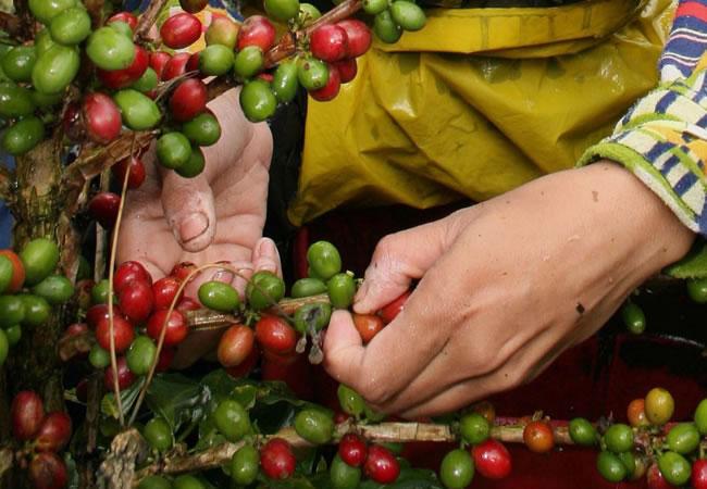 Colombia, a la cabeza de tecnologías para detectar origen del café