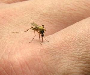 Un barrio en Santa Marta está contagiado del virus Chikungunya