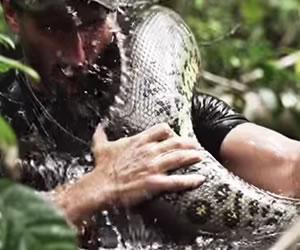 La anaconda se niega comerse a Paul Rosolie