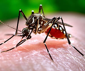 Chikunguña, los repelentes pueden ser un problema para los niños