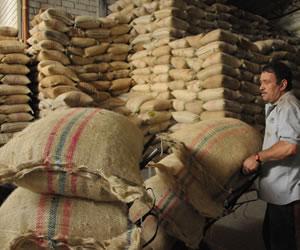Producción de café en Colombia sube un 8 % y llega a 12,3 millones de sacos