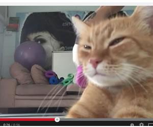 Gato interrumpe sesión de yoga
