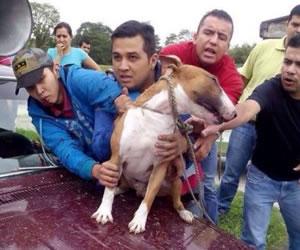 Piden cárcel para asesinos de perro Bull Terrier en Pitalito, Huila