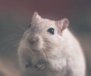 Nueva sustancia reduce el peso de los ratones obesos