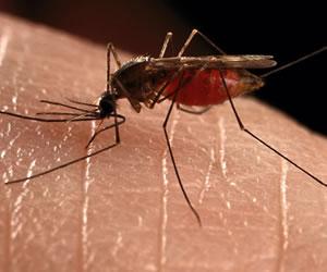 ¿Cómo tratar la alergia producida por el Zika?
