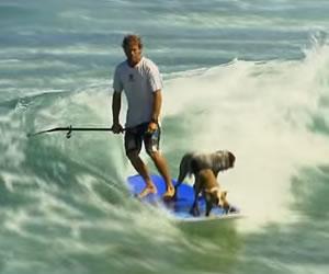 Dos perros hacen Surf con su amo