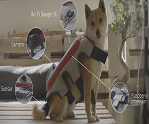 Chaleco, le permite a tu perro publicar sus selfies en redes
