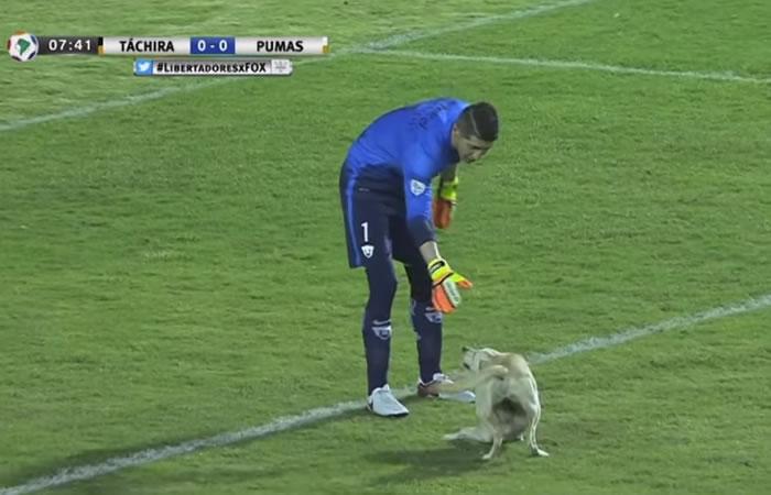 Copa Libertadores: un perro quiso entrar a jugar el partido