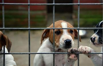 Procurador rechaza demanda que reclama los derechos de los animales