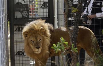 """""""Espíritu de libertad"""" logró la libertad de 33 leones"""