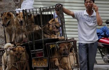 China: Comenzó el polémico festival de carnicería de perros