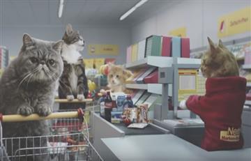 Youtube: comercial de gatos se vuelve viral