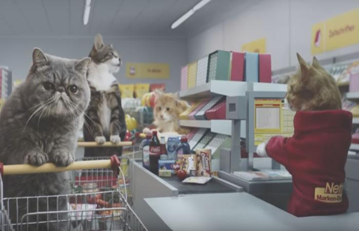 Gatos se convierten en un fenómeno virtual. Foto: Youtube