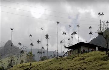 Colombia invertirá más de 2.400 millones para proteger palma de cera