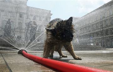 ¿Cómo identificar los síntomas de una gripa canina?