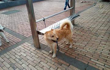 La historia de 'Oxxo', el perrito que ha conmovido las redes sociales