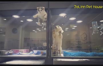 Gatito se escapa de su jaula para visitar a su amigo perro